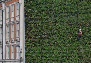 >thisisjustarandomplaceholder<5 ventajas de utilizar paredes y muros verdes en tu hogar   Iberian Press®