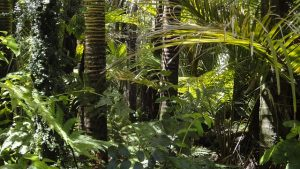 >thisisjustarandomplaceholder<Selva amazonica - IP   Iberian Press®