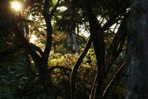 >thisisjustarandomplaceholder<Selva colombiana - IP | Iberian Press®